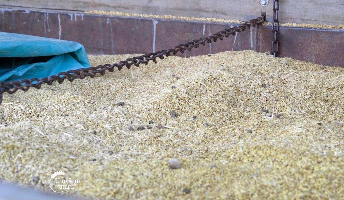 Agrosaveti - Farma svinja u Starom Žedniku 05