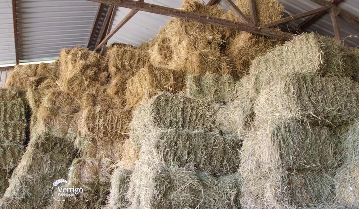 Agrosaveti - Govedarstvo u Svilajncu 06