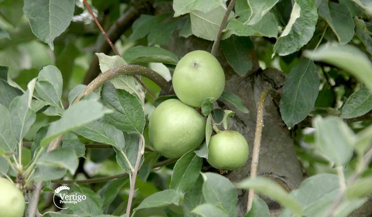 Agrosaveti - IPARD prednosti i nedostaci 03