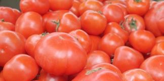 Agrosaveti - Leskovacki paradajz 01