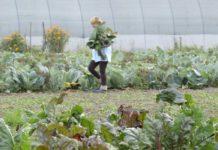 Agrosaveti - Obuka za organsku proizvodnju 04