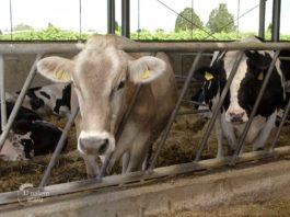 Agrosaveti - Organsko govedarstvo 04