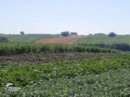 Agrosaveti - Organsko konvencionalna proizvodnja 02