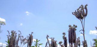 Agrosaveti - Pcelarstvo u Staparu 05