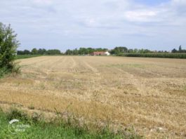 Agrosaveti - Posledice vremenskih neprilika 04