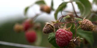 Agrosaveti - Problemi u poljoprivredi 01