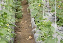 Agrosaveti - Rast organske proizvodnje u Srbiji 03