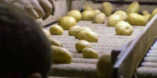Agrosaveti - Semenski krompir Gornji Banjani 04