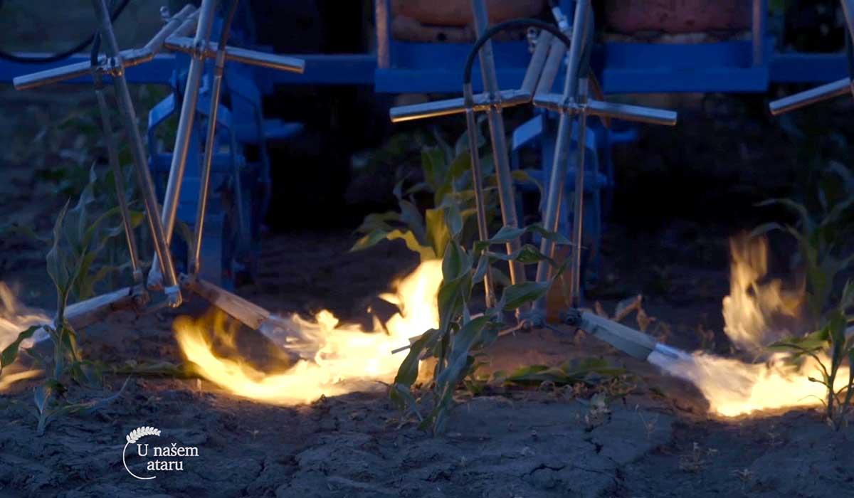 Agrosaveti - Suzbijanje korova plamenom 01