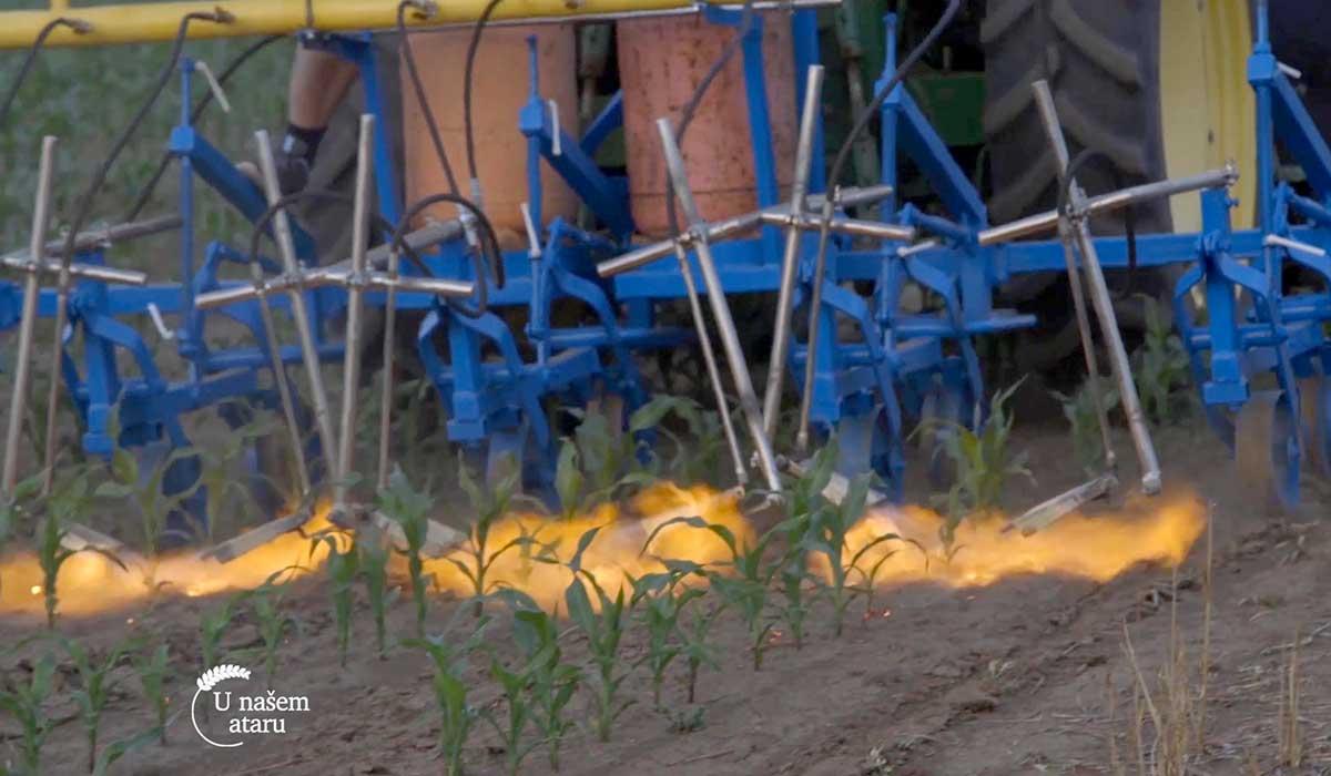 Agrosaveti - Suzbijanje korova plamenom 03