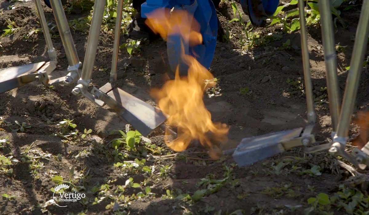 Agrosaveti - Suzbijanje korova plamenom 08