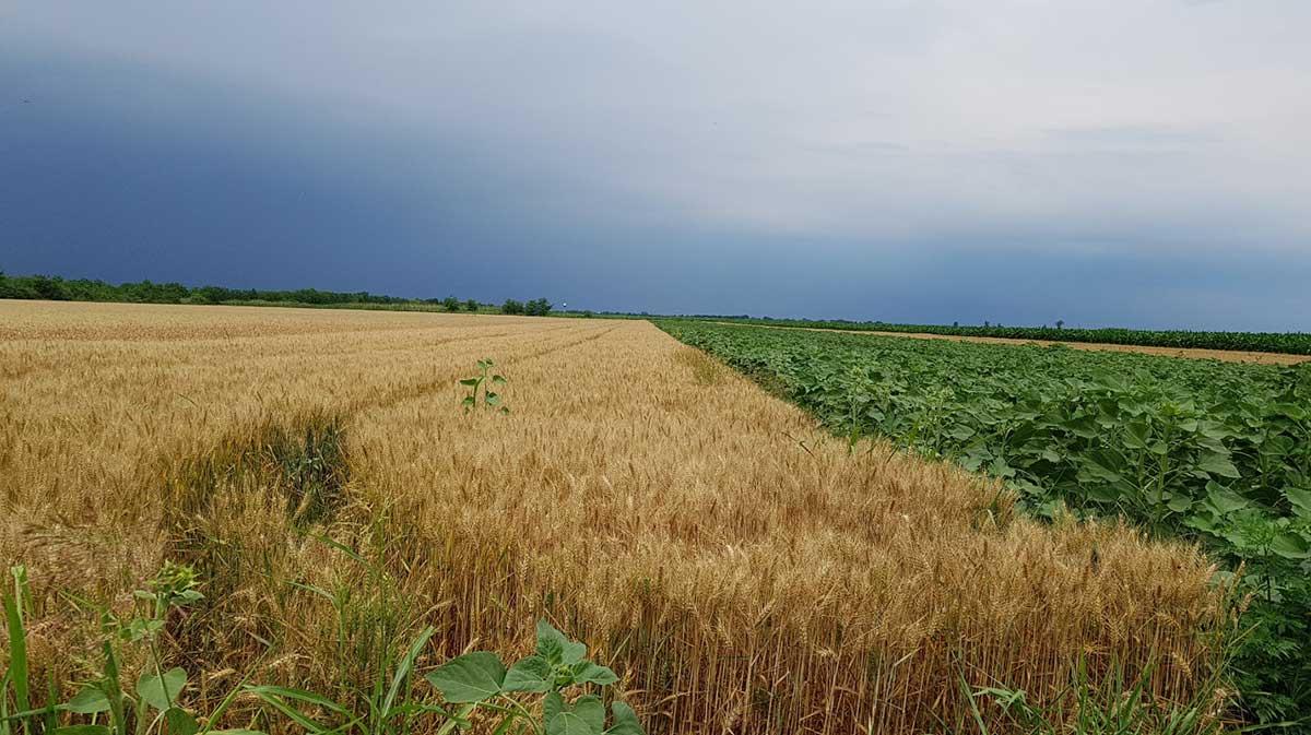 Agrosaveti---Syngenta-dani-polja-01
