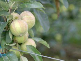 Agrosaveti---Timac-Agro,-Dan-polja-02