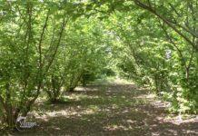 Agrosaveti - Uzgoj lesnika u Hrtkovcima 02