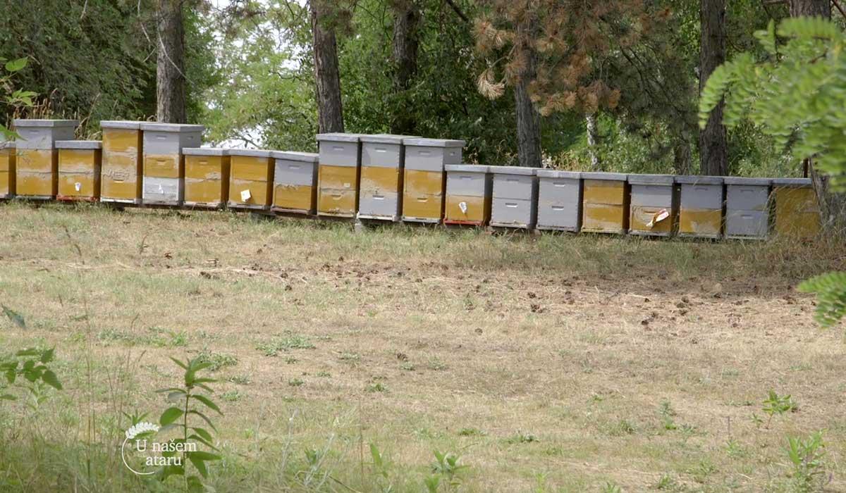 Agrosaveti - Uzgoj pčela u Bačkom Monoštoru 04