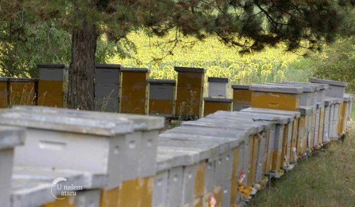 Agrosaveti - Uzgoj pčela u Bačkom Monoštoru 05