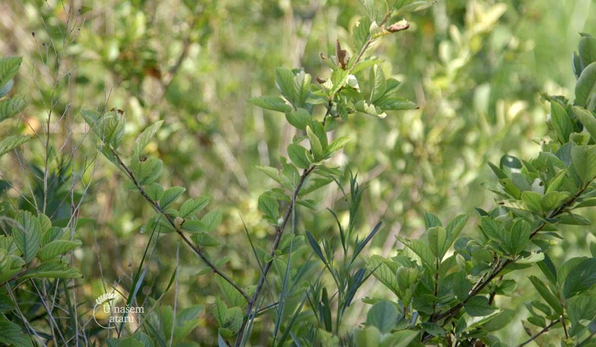 Agrosaveti - Zaštitni pojasevi u organskoj proizvodnji 01