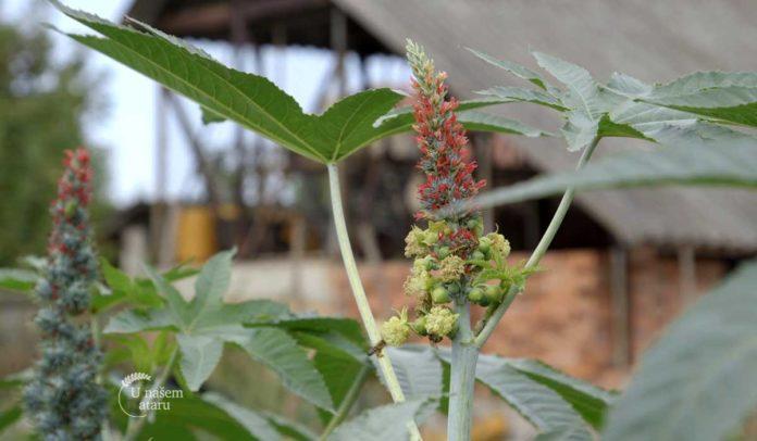 Agrosaveti - Zastita u organskoj proizvodnji 03 (2)