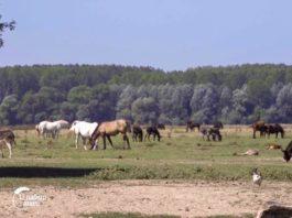 Agrosaveti - Autohtone rase na Krčedinskoj adi 05
