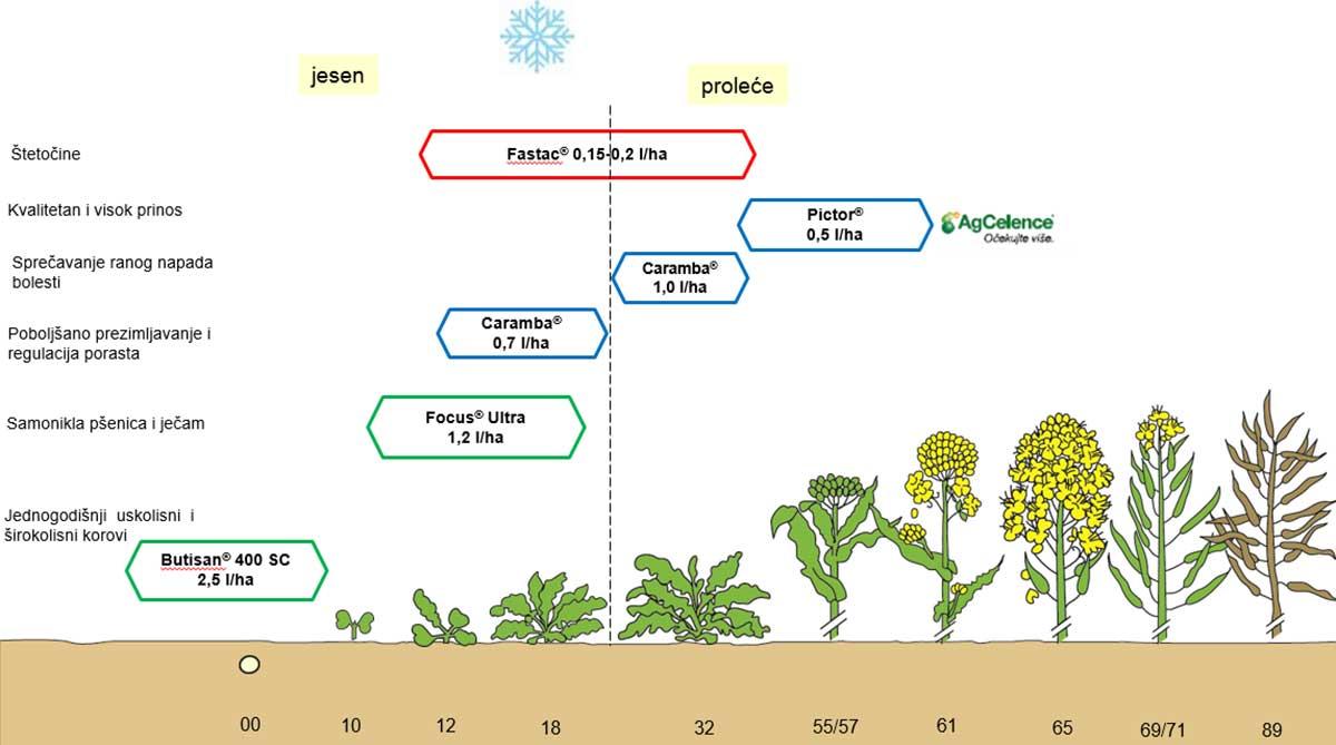 Agrosaveti---BASF--zastita-uljane-repice-06