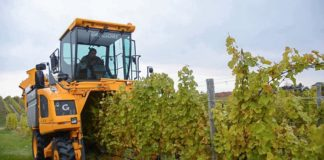 Agrosaveti - Berba grožđa u Vršačkim vinogradima 01