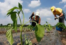 Agrosaveti - Konkurs za dodelu bespovratnih sredstava 01