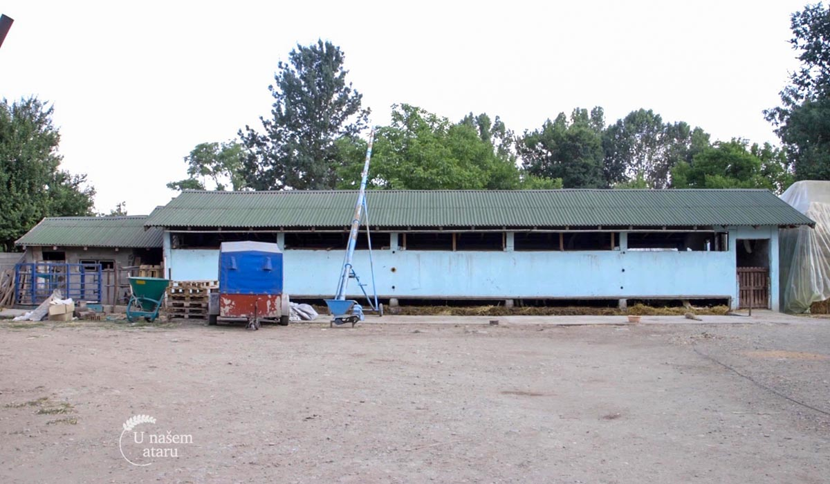 Agrosaveti - Mlečno govedarstvo i tov junadi u selu Vukašinovac 04