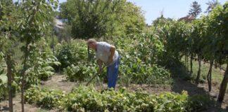 Agrosaveti - Organska proizvodnja i zašto se baviti njome 02