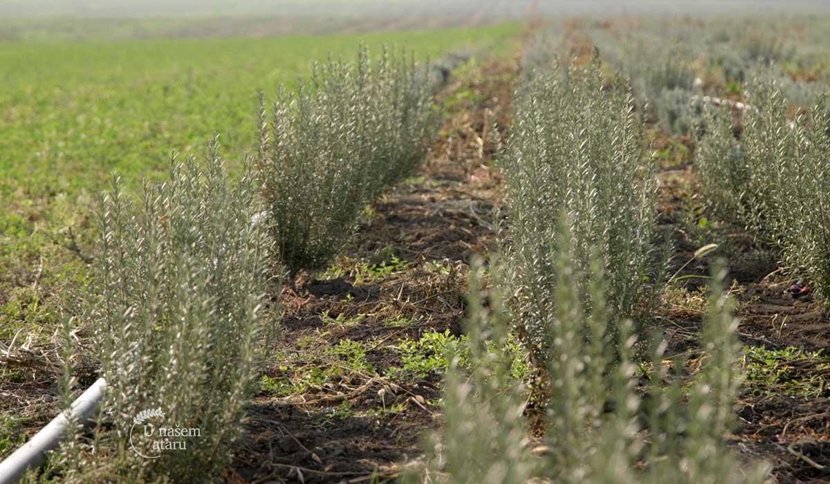 Agrosaveti - Organska proizvodnja i zašto se baviti njome 03