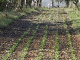 Agrosaveti - Organska proizvodnja povrća i voća 03