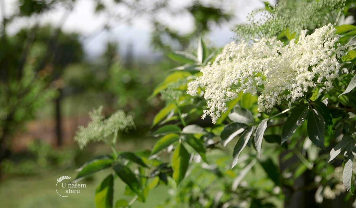Agrosaveti - Organska proizvodnja voća 03