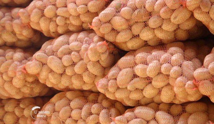 Agrosaveti - Proizvodnja krompira u Koštunićima 01