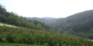Agrosaveti - Proizvodnja malina u Koštunićima 05