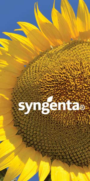 Agrosaveti---SYNGENTA_BANER_300X600_DEC2018