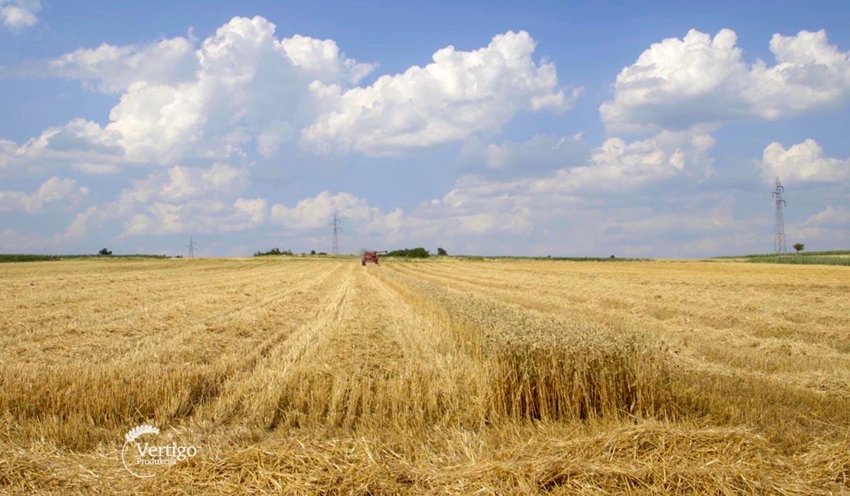 Agrosaveti - Tov junadi u selu Rutevac 05