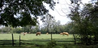 Agrosaveti - Uzgoj krava na otvorenom 04