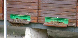Agrosaveti - Virusi pčela 01