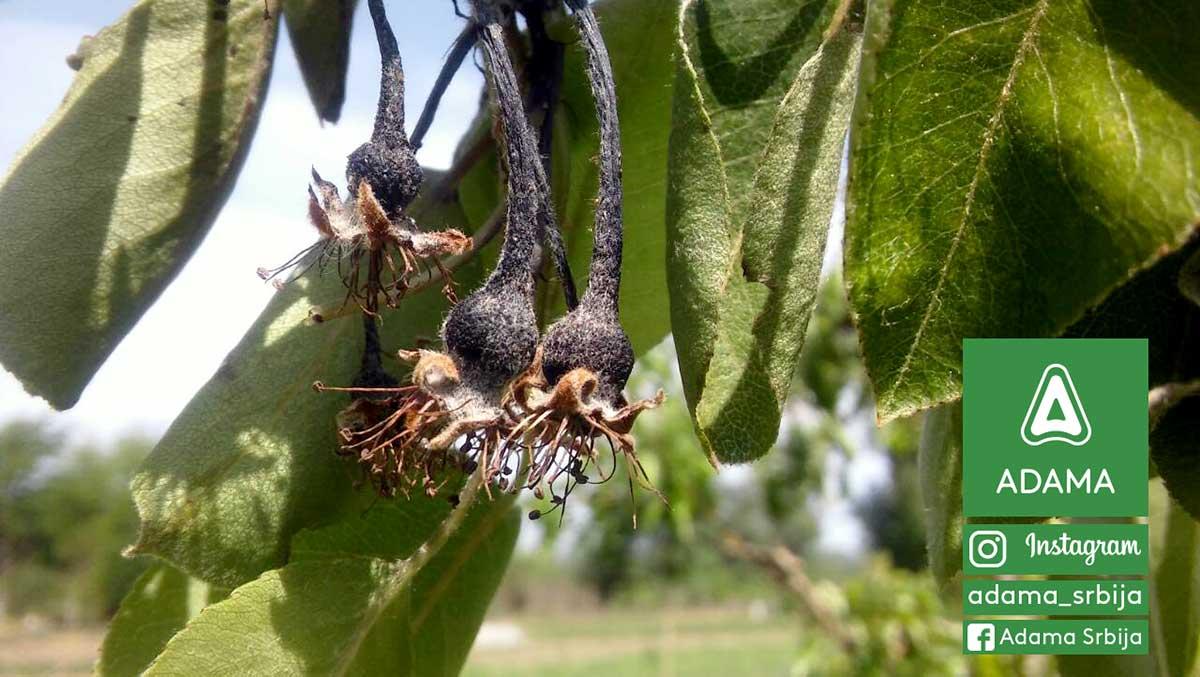 Agrosaveti---Adama---Ervinia---plod---jesenje-plavo-prskanje---voce---breskva---tresnja-03