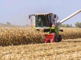 Agrosaveti - Berba kukuruza 01