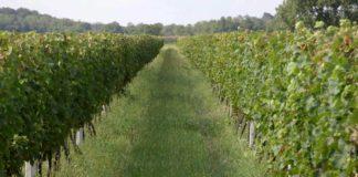 Agrosaveti - Biodinamika 02