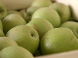 Agrosaveti - Cena jabuka 01