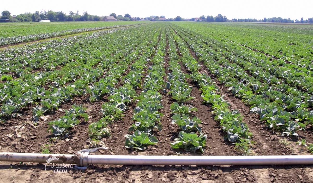 Agrosaveti - Moderna proizvodnja povrća 04