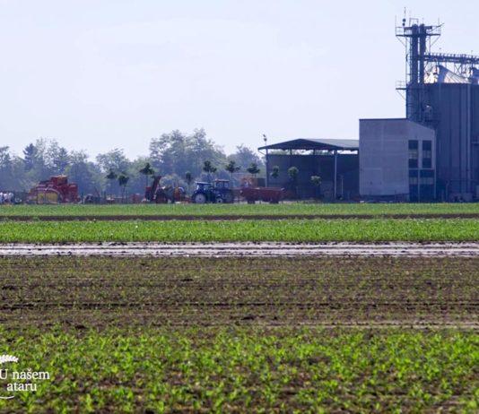 Agrosaveti - Moderna proizvodnja povrća 07