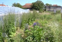 Agrosaveti - Organska poljoprivreda u Šumadiji 06