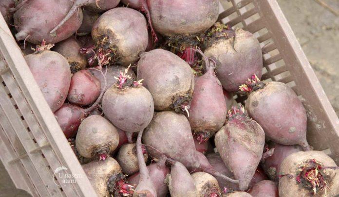 Agrosaveti - Organsko povrtarstvo 06