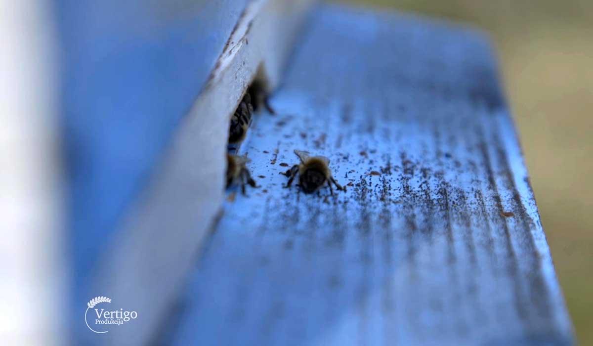 Agrosaveti - Pčelarska sezona u Despotovcu 03