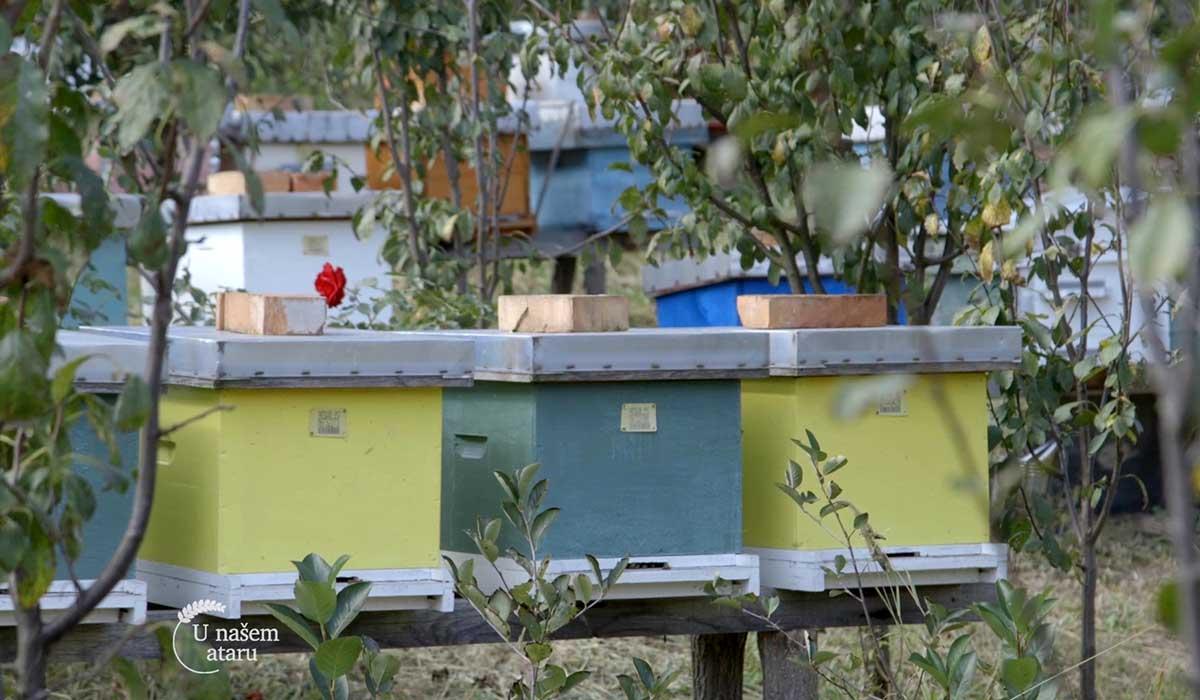 Agrosaveti - Pčelarska sezona u Despotovcu 04