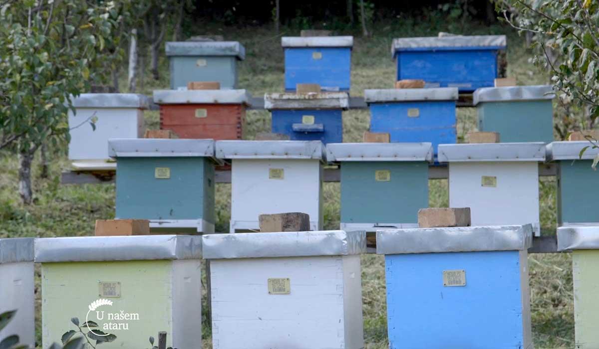Agrosaveti - Pčelarska sezona u Despotovcu 05
