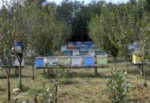 Agrosaveti - Pčelarska sezona u Despotovcu 06