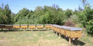 Agrosaveti - Proizvodnja meda u Odžacima 03